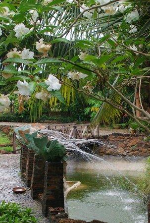 Faasai Resort & Spa: Around the grounds