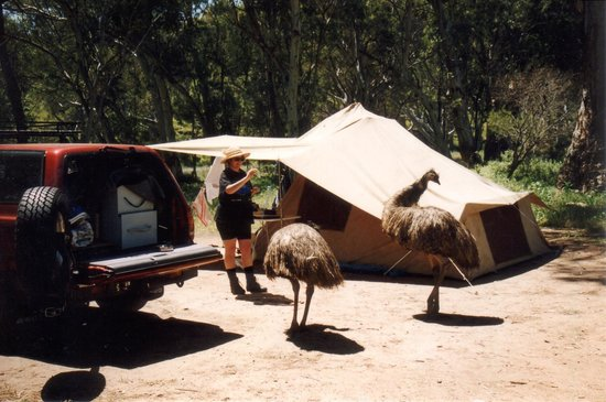 Southern Flinders Ranges Experience with Lunch: Southern Flinders Ranges SA