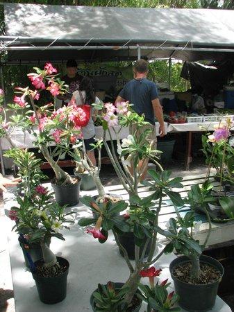 Wat Mongkolrata Temple: Dessert rose for sale
