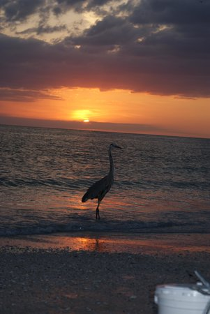 Sarasota Sands: Beautiful sunset