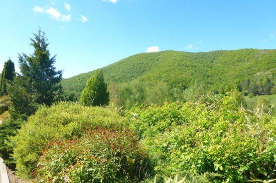 Domaine de Falgos: Les montagnes vue du site