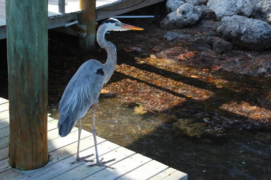 Little Palm Island Resort & Spa, A Noble House Resort: Beautiful birds