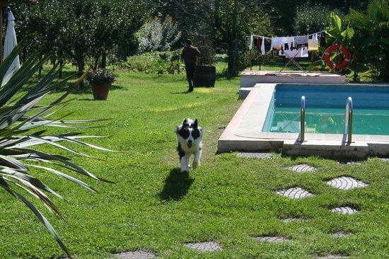 Casale i Girasoli: piscina (al momento della foto era aprile quindi non funzionante) con sfondo frutteto