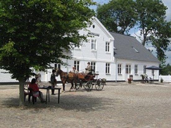 Holtegaard Bed & Breakfast: Holtegaard with horses