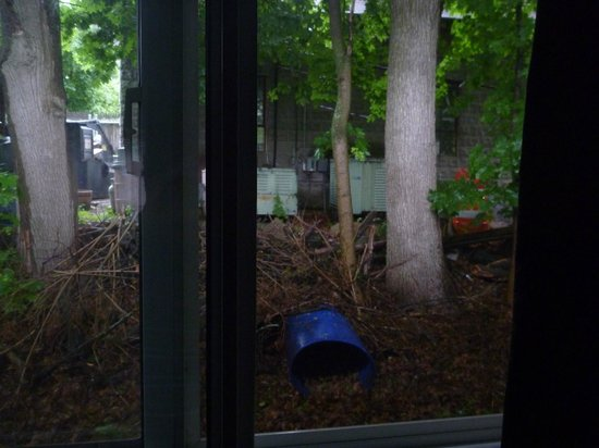 Bedford Motel : view in the backyard