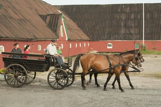 Holtegaard Bed & Breakfast: Horses and wagon