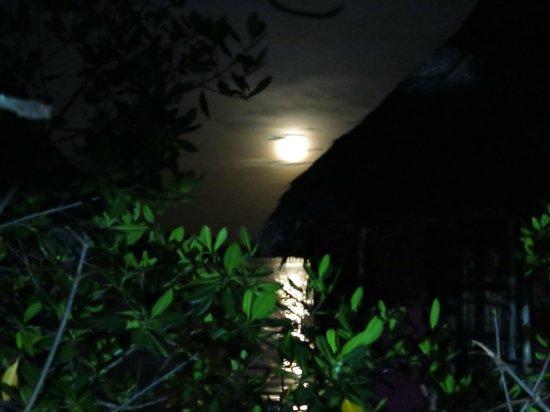 Urraca Private Island : Full moon  at Urraca