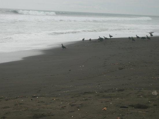 Hotel Luna Azul: black sand beach