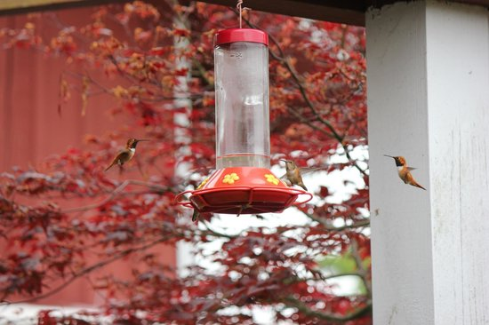 Whidbey Pies & Cafe: GreenBank hummingbirds