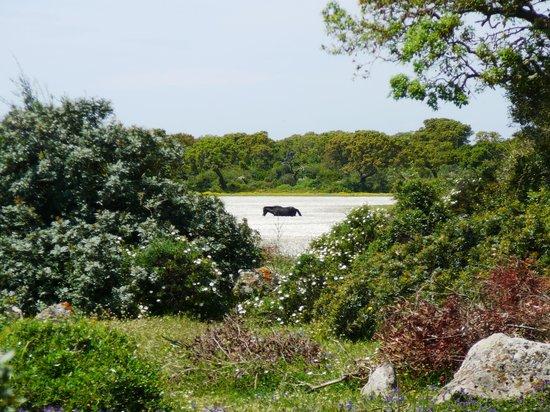 Parco della Giara Tuili: cavallino al pascolo sulla Giara
