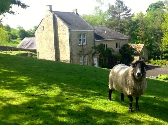 Home Farm : We have three sheep!