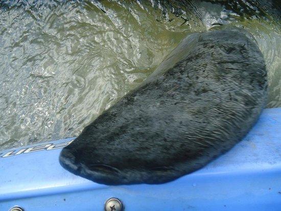 Cracker Creek : he gave our kayak a hug