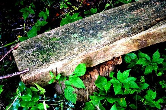Broomhill House B&B: Garden bench