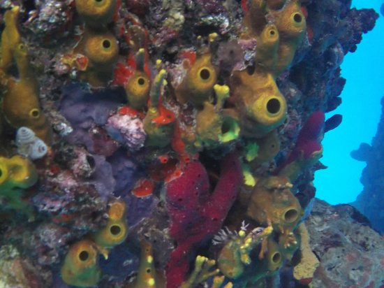 Frederiksted Pier: snorkeling the pier