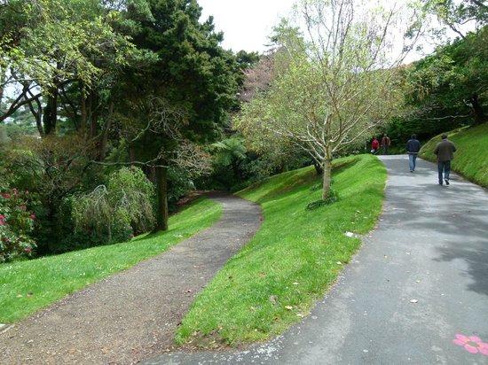 Wellington Botanic Garden: senderos