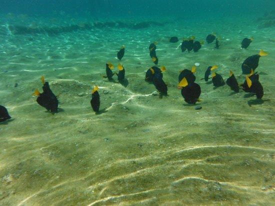 U Coral Beach Club Eilat Booking Les poissons - ...