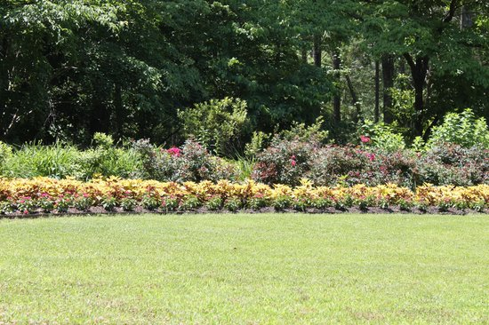 Callaway gardens picture of callaway gardens pine for Callaway gardens fishing