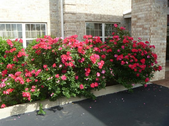 Ramada Shelbyville/Louisville East : beautiful grounds and flowers....nice