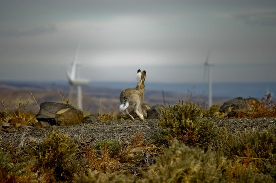 Wild Horse Renewable Energy Center: Jack Rabbit