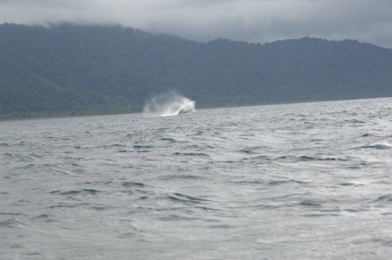 Rocas de Cabo Marzo: Probably the last humpback in the area!
