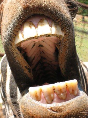 Wild Animal Safari: Feed me -- I'm hungry!