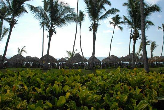 VIK Hotel Arena Blanca: Blick vom Balkon zum Strand
