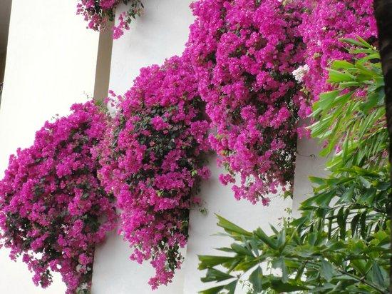 Velas Vallarta Suite Resort: flowers hanging from balconies