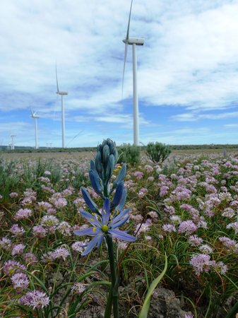 Wild Horse Renewable Energy Center: Wildflowers at the pond
