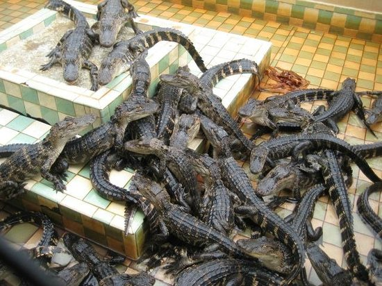 Gatorama: We fed these guys