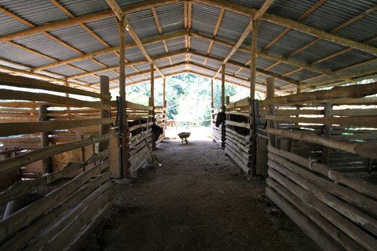 Establo San Rafael B&B: In the barn