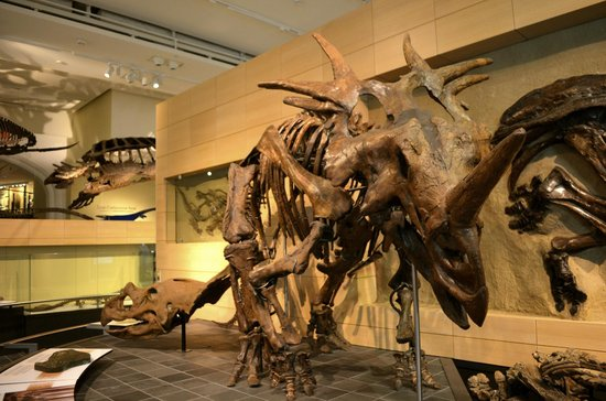Canadian Museum of Nature: Fossil Gallery