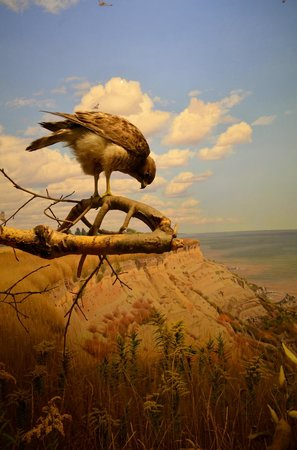 Canadian Museum of Nature: Bird Gallery