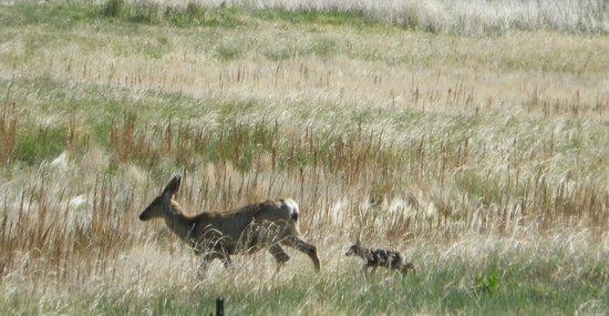 Malheur National Wildlife Refuge: New life
