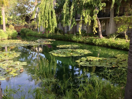 Ramada Santa Barbara: Courtyard lily pond
