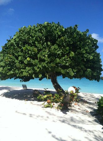 Casa Caribe: beach