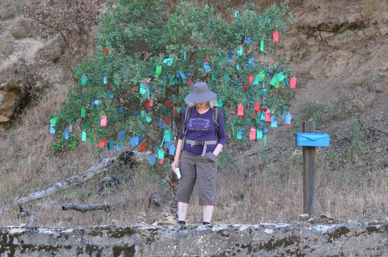 Wilbur Hot Springs : Wishing Tree