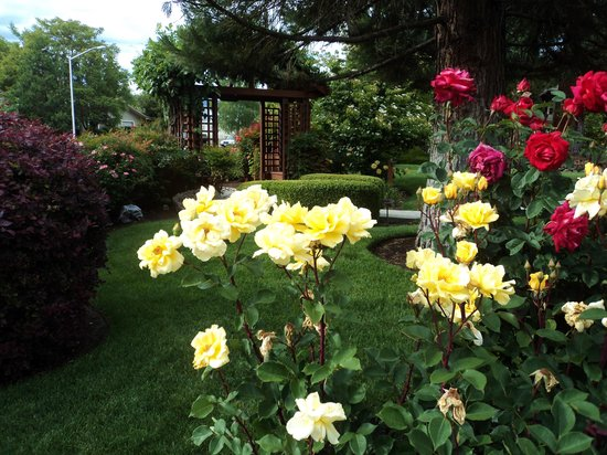 Redwood Hyperion Suites: Roses in the yard