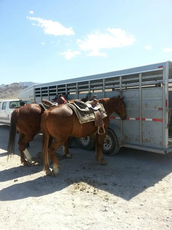 Sagebrush Ranch: the horses we rode