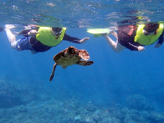 Malama Ke Kai - Reef Guides Hawaii: Snorkeling with turtles