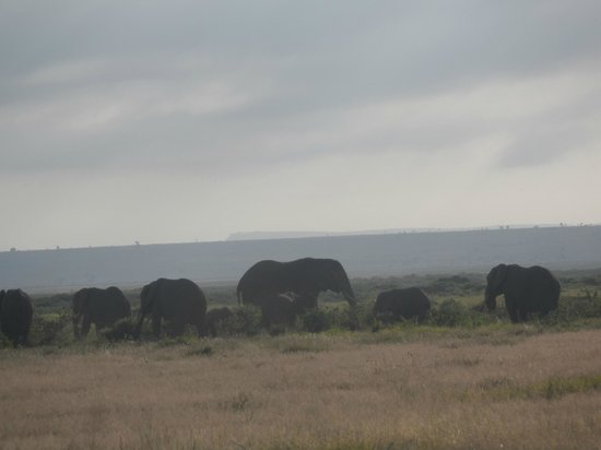 Ol Tukai Lodge: A view of the elephants from the swimming pool area