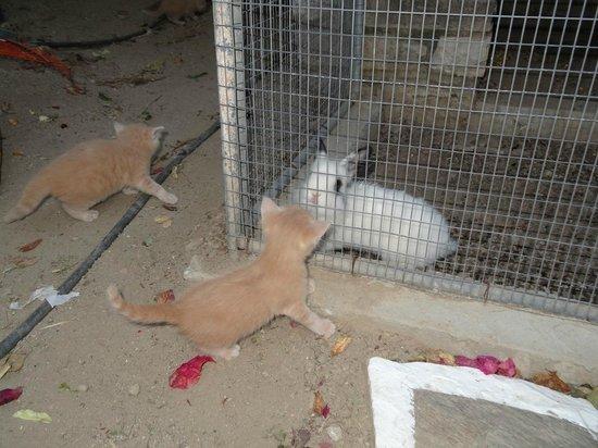 Pension Sofia : Le jardin abrite aussi quelques chatons et un lapin