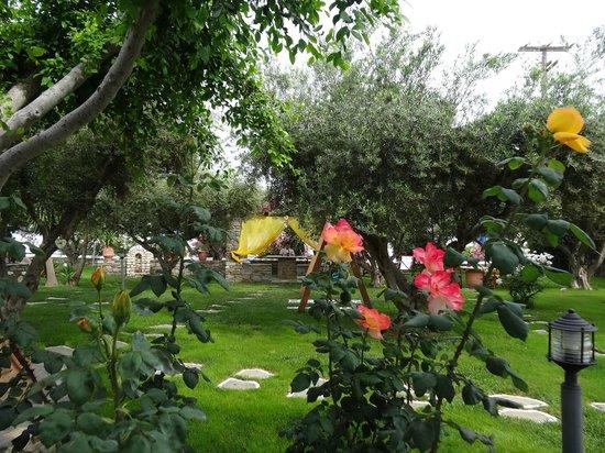 Pension Sofia : Le magnifique jardin