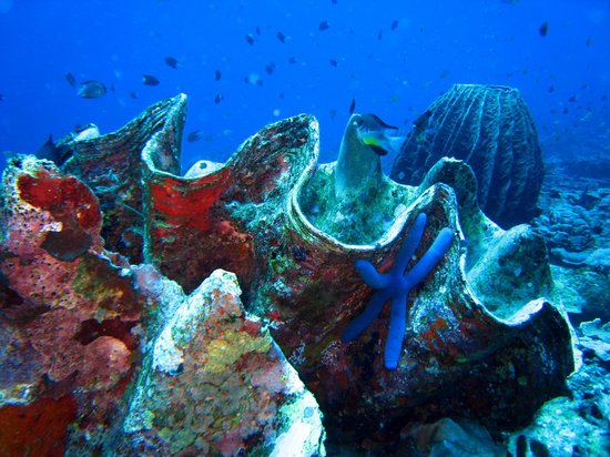 Bunaken Divers - Sea Breeze Dive Resort: in immersione ...