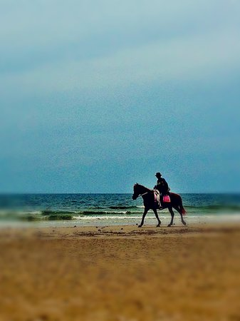 Nilawan Guest House Hua Hin: Horses available to ride along the beach