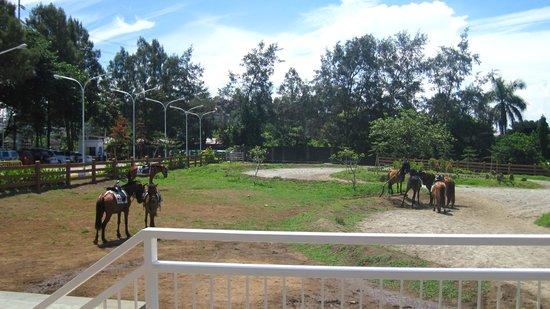 Sky Ranch: horseback riding
