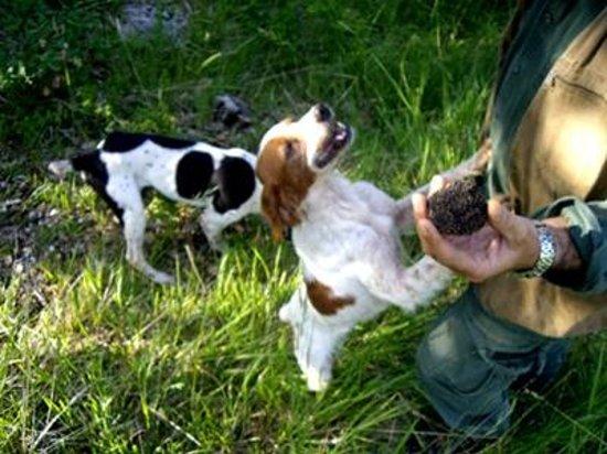 Wild Foods Italy: The Truffle Hunters