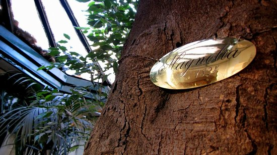 Ristorante La Fontana : Magnolia
