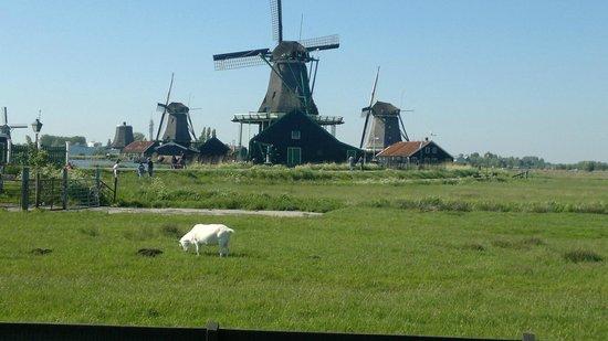 بست ويسترن بلو تاور هوتل: Etwas ausserhalb von Amsterdam