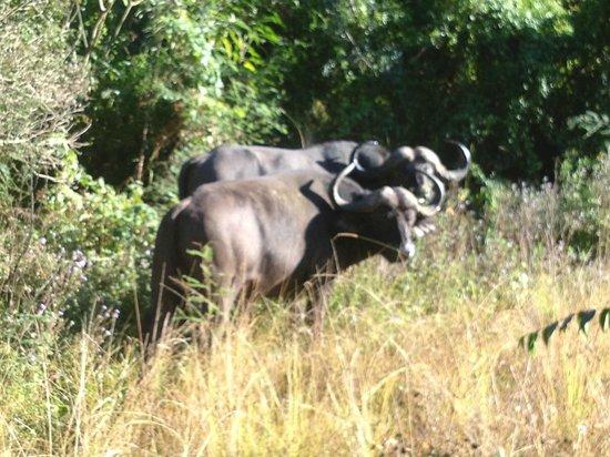 Karkloof Safari Spa : game drive