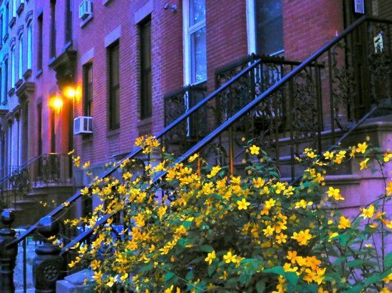 Brooklyn, Nova York: Carroll Gardens le soir
